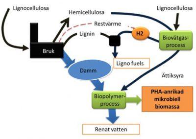 Bioplastogen